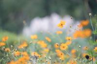 神代植物公園の10月〜バラ以外 - 柳に雪折れなし!Ⅱ