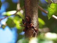 千葉市都市緑化植物園で見かけた昆虫 - いや、だから 姉ちゃん じゃなくて ネイチャー・・・