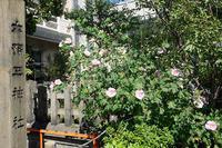 宝永祭@六孫王神社其の一 - デジタルな鍛冶屋の写真歩記