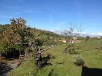 秋の山、柿初収穫 - ボローニャとシチリアのあいだで2