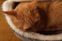 「楽浪(ささなみ)さんは今日も猫ベッド」 - もるとゆらじお