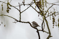 たられば‥ - 趣味の野鳥撮影