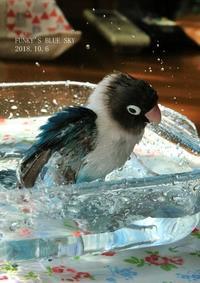 水浴びB.Bの記録→(10月6日・前編) - FUNKY'S BLUE SKY
