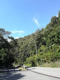 マロンと散歩@たつの市龍野公園周辺 - 空を見上げて