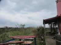 舗装道路完成!天気も回復に、カフェもオープン! - 沖縄山城紅茶 茶摘み日記
