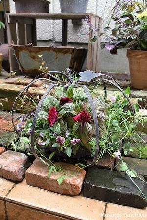 秋のガーデニングシーズンの始まりです - この植物をお買い2