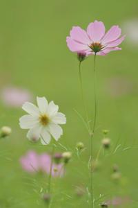 大阪市立大学理学部附属植物園 - 写真部