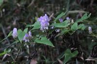 ■花アラカルト3種18.10.13(ツクバトリカブト、ツリフネソウ、キツリフネ) - 舞岡公園の自然2