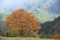 台高山脈紅葉始まる(2) - ratoの山歩き