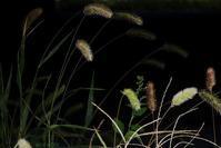 草の舞 - フォトな日々