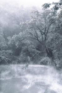 朝の池 - Capu-photo Digital photographic Laboratory
