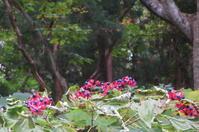 藍色の果実・・・クサギ(臭木) - 長女Yのつれづれ記