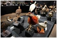 標本の世界:鳥 -  one's  heart