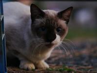 「疑心暗鬼」・・・我が街の街角フォト撮影会スナップ集(1)NOCTICRON F1.2 85mm相当で - 『私のデジタル写真眼』