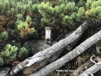 南アルプス白峰三山縦走Day1広河原から北岳Mount Kita in Minami Alps National Park - やっぱり自然が好き