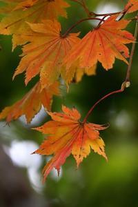 やってくる秋 - miyabine's フォト日記2~身の周りのきれい・可愛い・面白い~