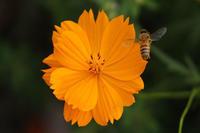 淀川河川敷の蜜蜂ハッチ! - 写真で楽しんでます! スマホ画像!
