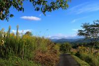 秋空にセイタカアワダチソウ/ナイトサファリ - ~葡萄と田舎時間~ 西田葡萄園のブログ