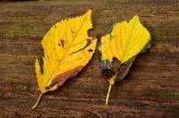 森の秋 - つれづれ日記