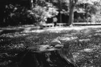 台風一過の公園に残された儀式の跡 - Film&Gasoline
