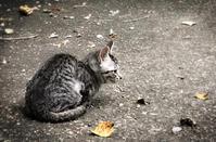 子猫 - peu frequente
