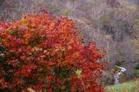 晩秋の彩り2ノロメキ沢 - 888WebLog