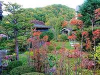 645、秋深まる:大根収穫,山川民夫先生の訃報 - 五十嵐靖之 趣味の写真と短歌