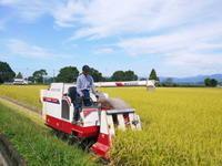 七城米長尾農園平成30年度の稲刈りスタート!新米の出荷は10月下旬からの予定です!(前編) - FLCパートナーズストア