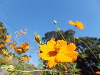 秋晴れの庭 - アオモジノキモチ