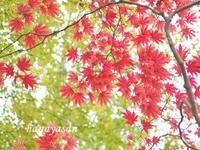 紅葉始まる - こもれびの森