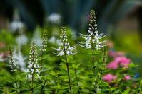 花壇 - 彩りの軌跡
