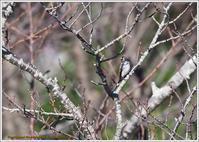 秋の展望台-5コサメビタキ - 野鳥の素顔 <野鳥と・・・他、日々の出来事>