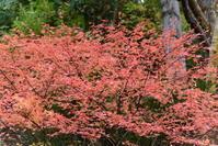 ちょっとは紅葉も - むーちゃんパパのブログ4