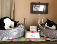 はちわれハッちゃんVSはちわれくりちゃんどっちが最強? - gin~tetsu~nosuke