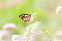 旅する蝶 - ゆるゆる野鳥観察日記