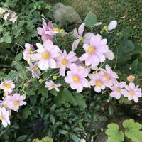 北の庭「美しい四季の庭をゆるりと!たどってみました・・・」編 - 納屋Cafe 岡山