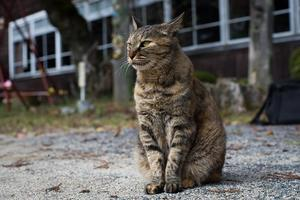 A Closed School Where An Affable Tabby Principal Lives - Soul Eyes