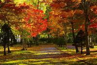 秋の道 - 風道