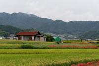 明日香村~彼岸花めぐり - katsuのヘタッピ風景