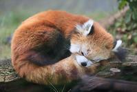 10月16日(火)再会 - ほのぼの動物写真日記