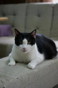 仔猫の魔法 - Black Cat Moan
