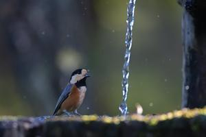 水場に集う鳥たち - やぁやぁ。