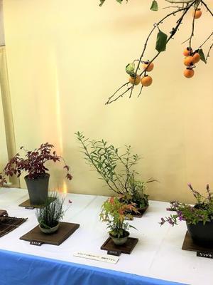 島根県~秋の山野草展示会様子 - 園芸のいのうえ屋
