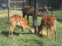 祝誕生 王子シタツンガ アスカさんの4番目の赤ちゃん - こらくふぁーむ