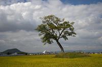 孤独の秋 - Wayside Photos  ☆道端ふぉと☆