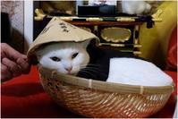 「猫猫寺」小雪住職 - 4にゃん日記+