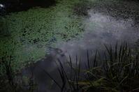 駆け足で巡る箱根 その6~箱根湿生花園の続き - 「趣味はウォーキングでは無い」
