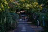 梨木神社の萩 - 鏡花水月