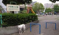 Vol.1402 小田第2公園 - 小太郎の白っぽい世界
