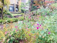 松平藩別邸 養浩館庭園の秋 - ふくい女将日記~宝永(ほうえい)旅館、おかみでございます。